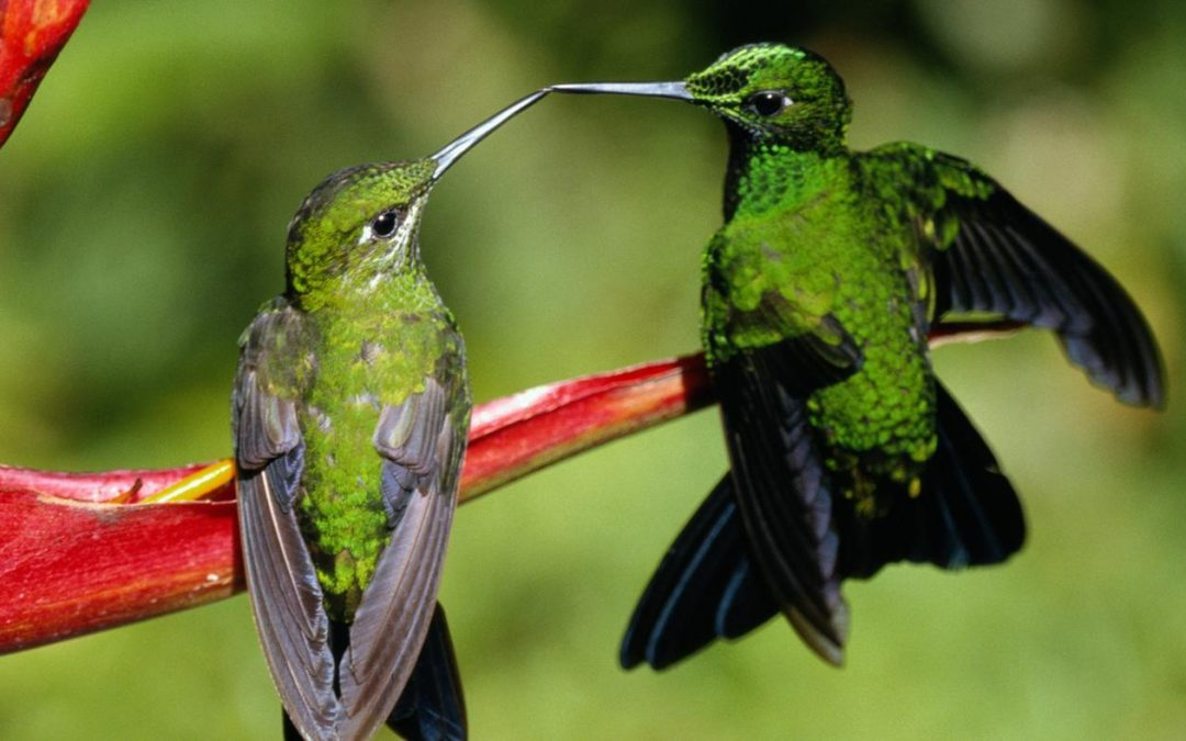 How does friendship work for Hummingbirds?