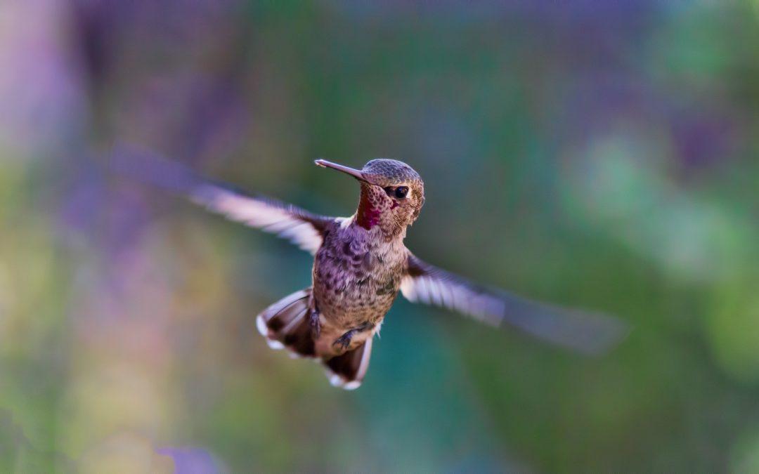 My empowering Hummingbird self!