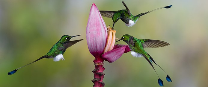 How hard is it being a Hummingbird in an organisation?
